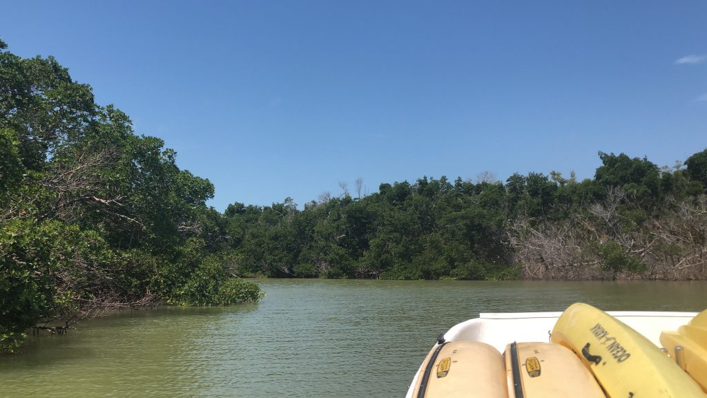 exploring the keys by boat in the florida everglades