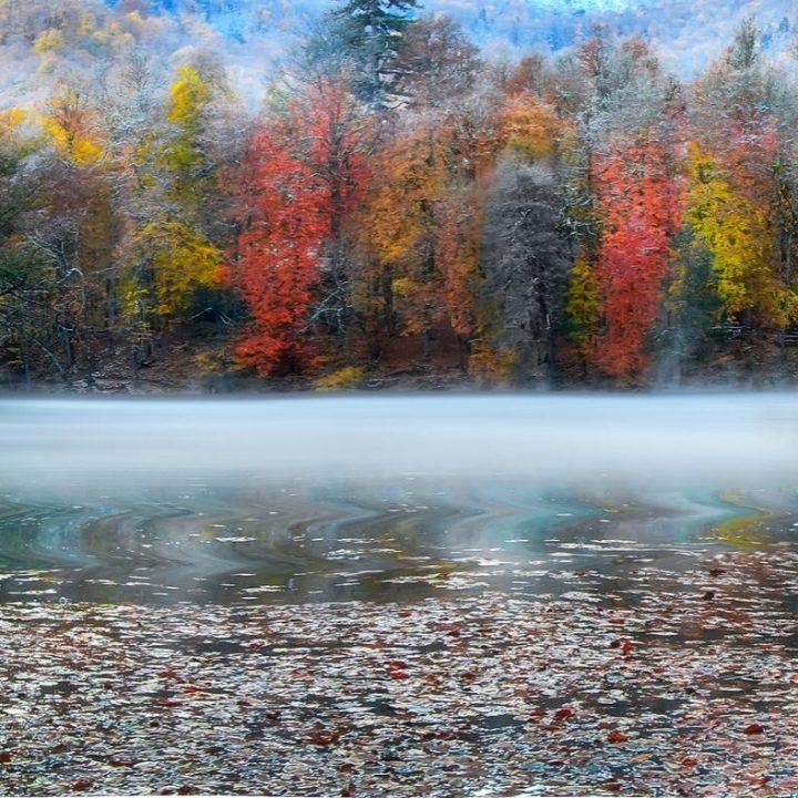 fall foilage 15