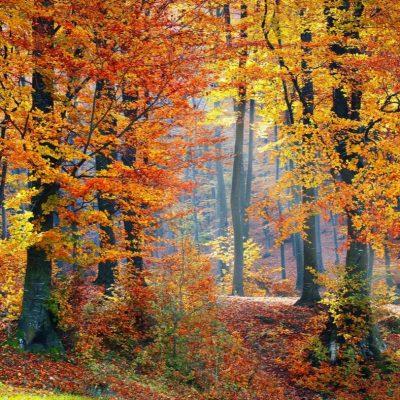 fall leaf peepers