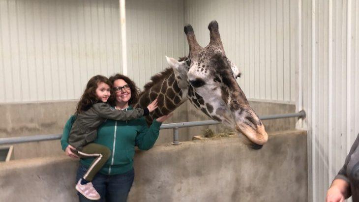 giraffe wilstem