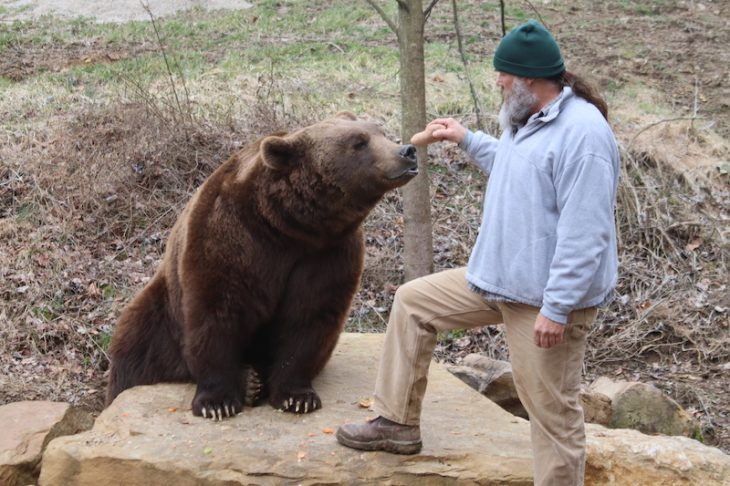 grizzly encounter wilstem